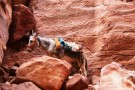 Esel Trekking Tour