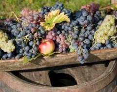 Weingutbesichtigung mit Weinprobe