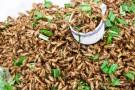 Insekten Kochkurs