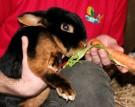 Tierpfleger Tag