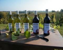 Weingutbesichtigung