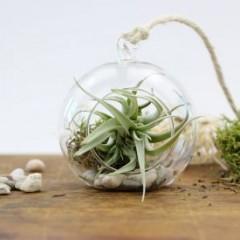 pflanze im glas zum aufh ngen als geschenk. Black Bedroom Furniture Sets. Home Design Ideas