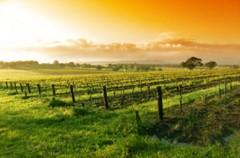 Steirische Weinstrassen für Zwei